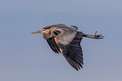 Cormorants, Egrets and Herons